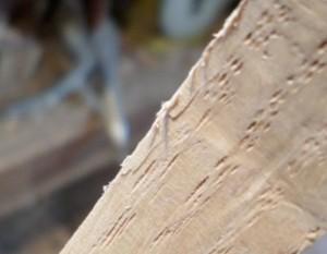 ripped fibers